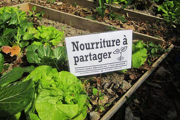 Five questions for the Incredible Edible